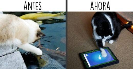 Como la tecnologia ha cambiado a los gatos