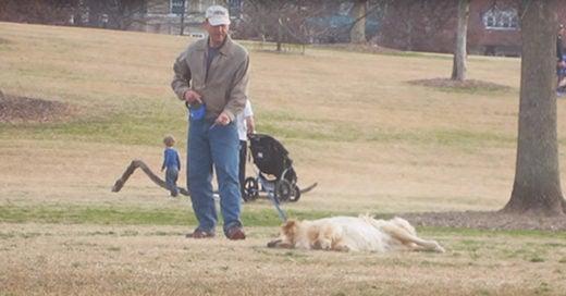 Este perro se izo el muertito para que su dueño no se lo llevara del parque