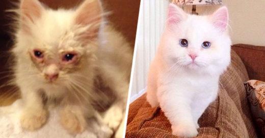 recuperación de Silas el gato rescatado