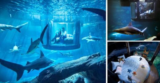 Airbnb's invitó a dormir con tiburones a 10 metros de profundidad