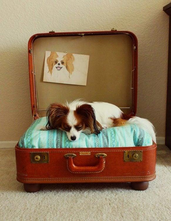 cama para perro con una maleta vieja