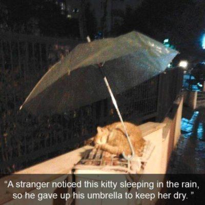 gato dormido en la lluvia y alguien le pone un paraguas para que no se moje
