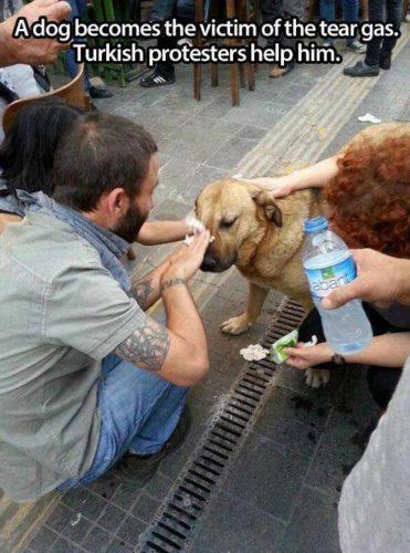 manifestantes limpiando con agua los ojos de un perrito al que le cayó gas lacrimógeno