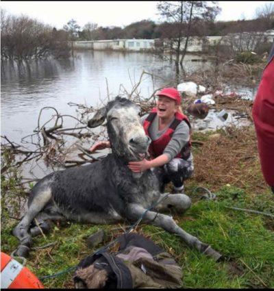 burro sonríe luego de ser rescatado