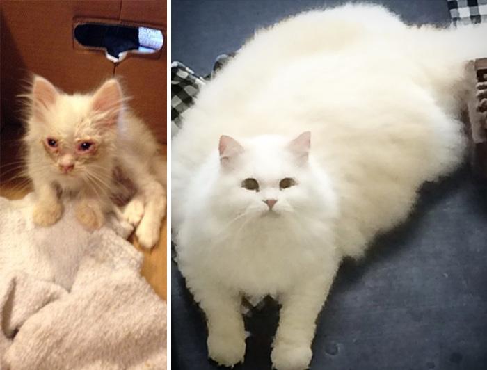 gato Silas rescatado antes y despuès