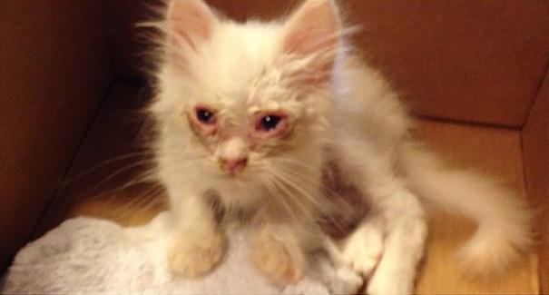 gatito Silas cuando fue rescatado