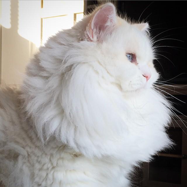 gato Silas sentado