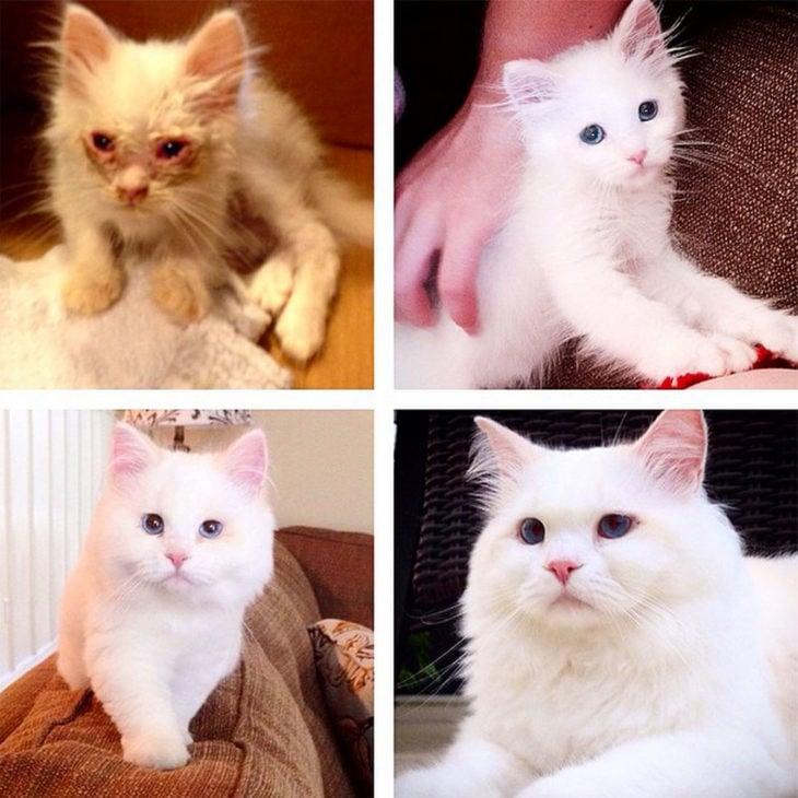 transformación en fotos de gato Silas