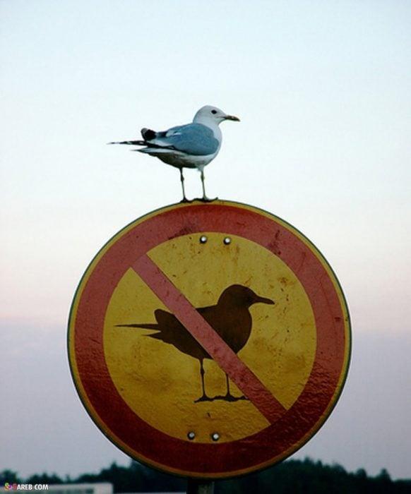 Ironía, letrero donde dice que no se permiten las gaviotas y una gaviota está parada encima del letrero