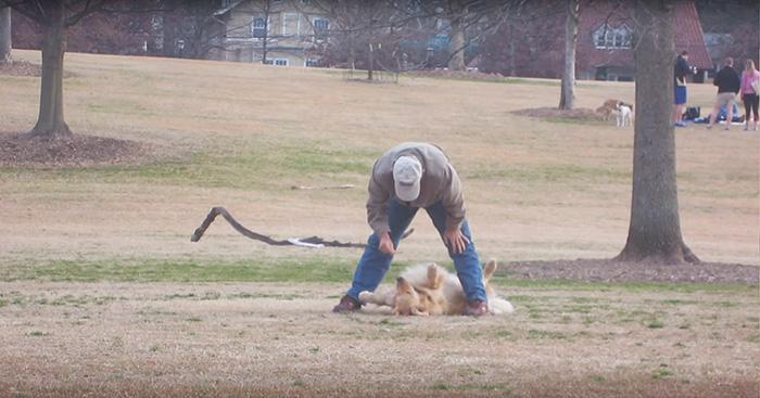 perro golden se hace el muertito para no irse del parque
