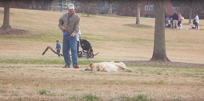 dueño de perro golden lo jala de la correa pero el perro se hace el muertito