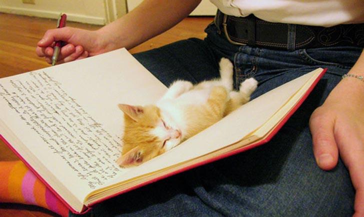 gato bebé acostado en la libreta donde su dueño estaba escribiendo