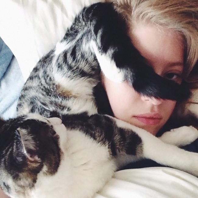 gato acostado en la cara de su dueña