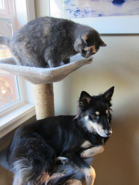 perro acostado en el juego para escalar del gato