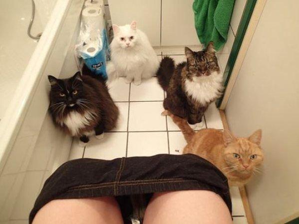 4 gatos viendo fijamente a su dueño mientras está en el baño