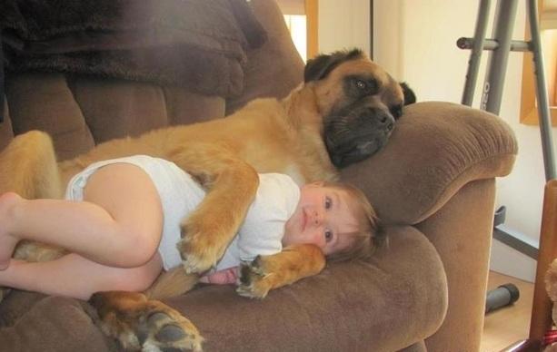 perro abrazando aniño mientras están acostados en un sillón