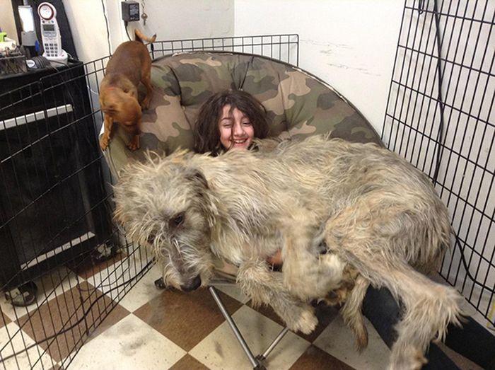 perro enorme sobre niña; la cubre toda