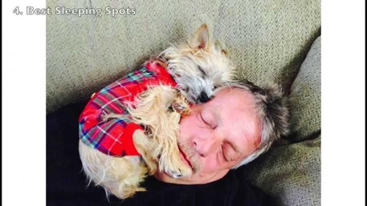 perro chiquito dormido en la cara de su dueño