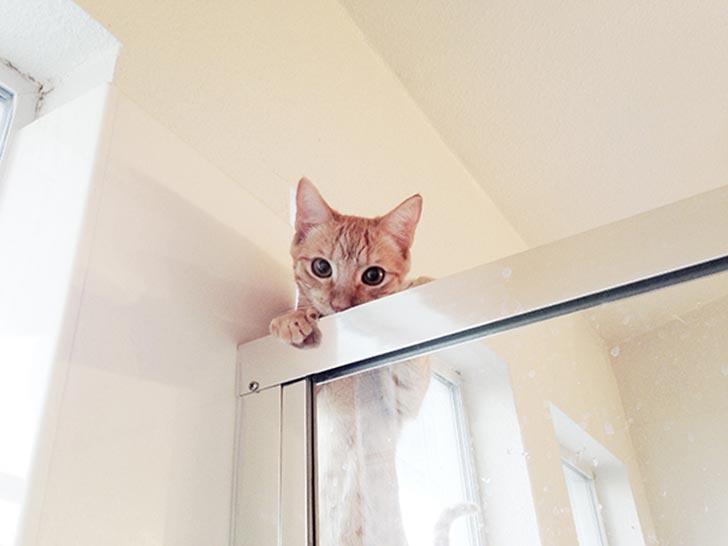 gato se asoma por la regadera