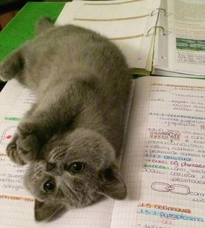 gato acostado encima de la tarea