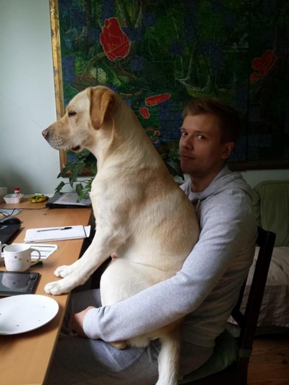 perro labrador sentado encima de su dueño mientras éste desayunaba