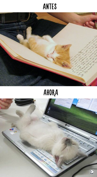 gato durmiendo en una libreta antes y ahora en el teclado de una laptop