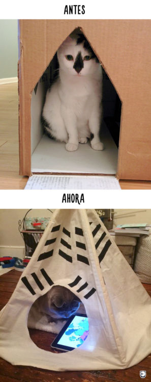gato en su casa antes y ahora con un ipad