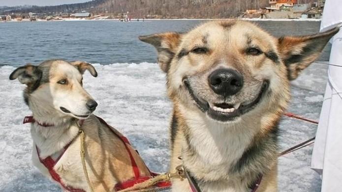 Imagen de dos perros en un bote en el mar, uno de ellos está viendo a la cámara y sonriendo