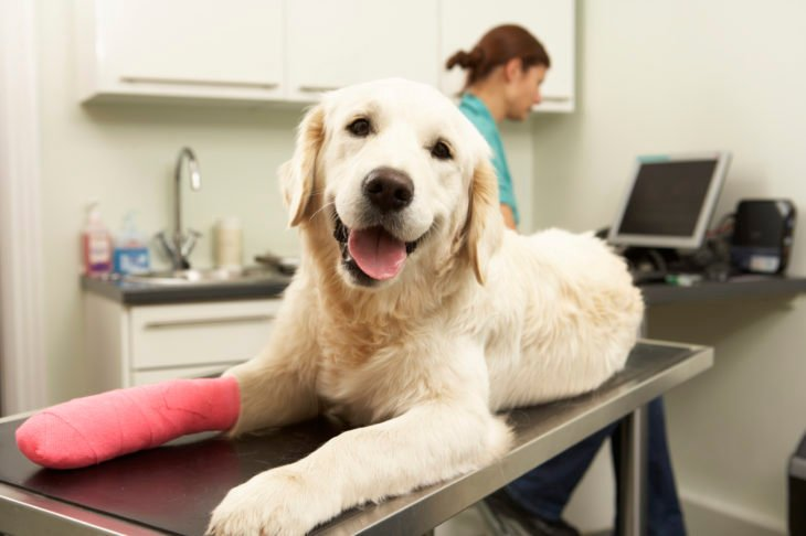 Perro en el veterinario