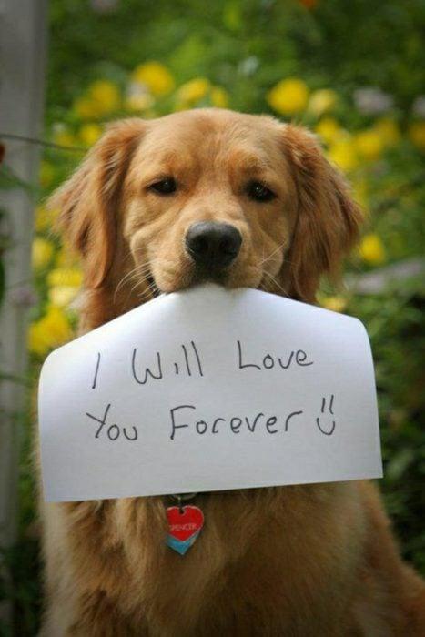 Imagen de perro con un papel que dice: Te amaré por siempre =)