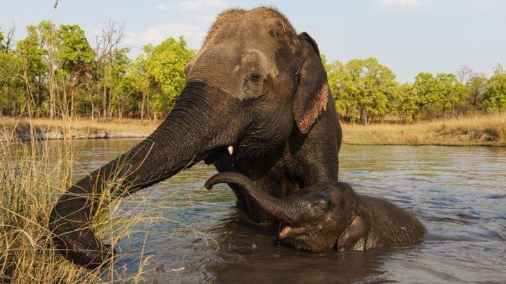 elefante cuidando a su cría