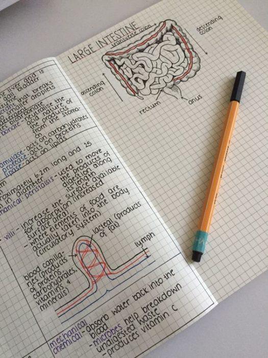 Apuntes organizados e inspiradores. Libreta con apuntes de anatomía con dibujos bien hechos y una tipografía muy bien cuidada