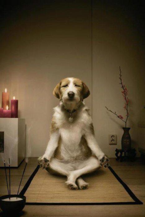 Perro zen