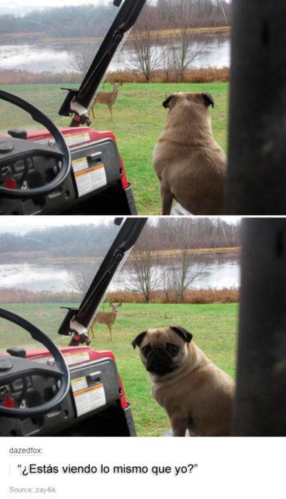 pueg sorprendido al ver un perro