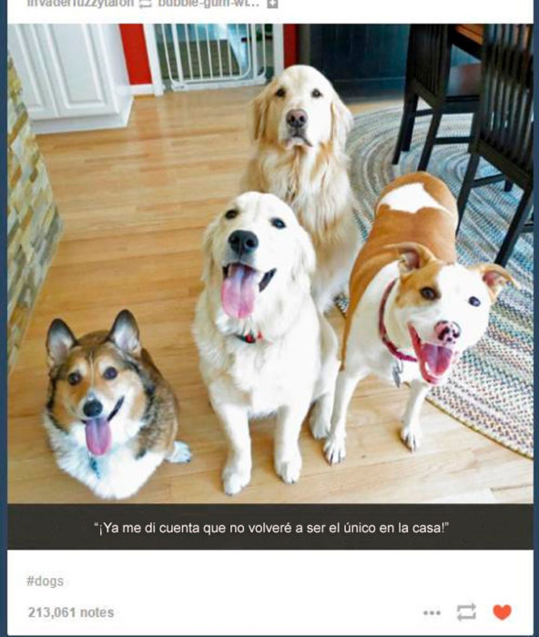 perro serio en medio de los que no lo son tanto
