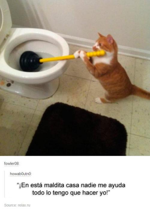gato con una cosa para destapar el baño