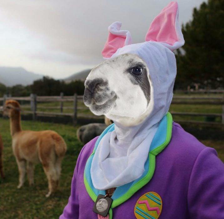 Imagen de Robert Downey Jr vestido de conejo con cara de un conejo real