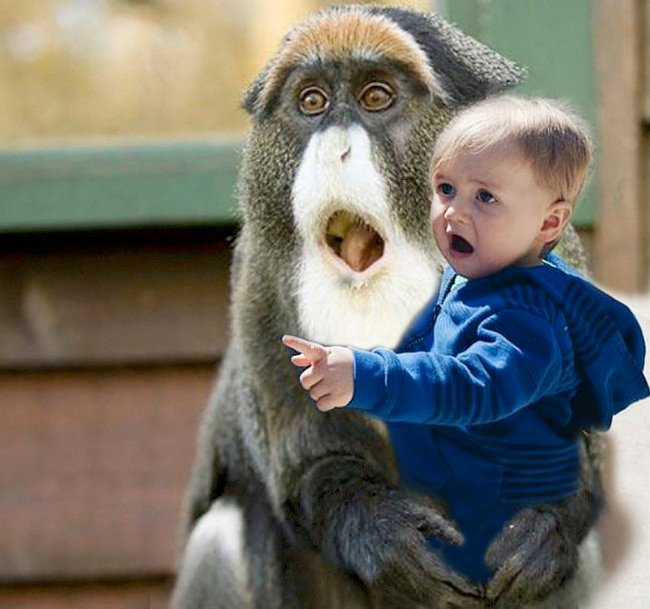 bebé sorprendido en los brazos de un chango