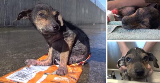 Perro abandonado en un canal es rescatado y su recuperación es asombrosa