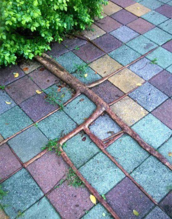 foto de una raíz de árbol bien acomodada en el piso