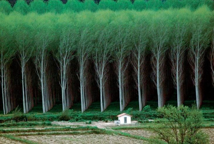 bosque lleno de árboles perfectamente alineados