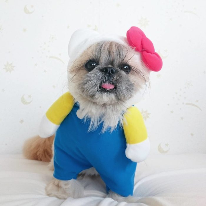 Kuma perrita vestida de hello kitty