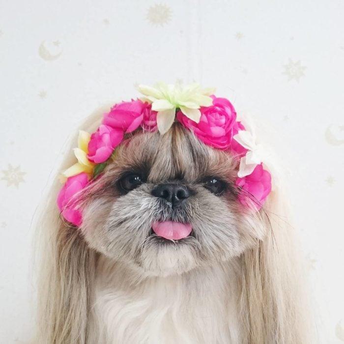 perrita peinada con una corona de flores