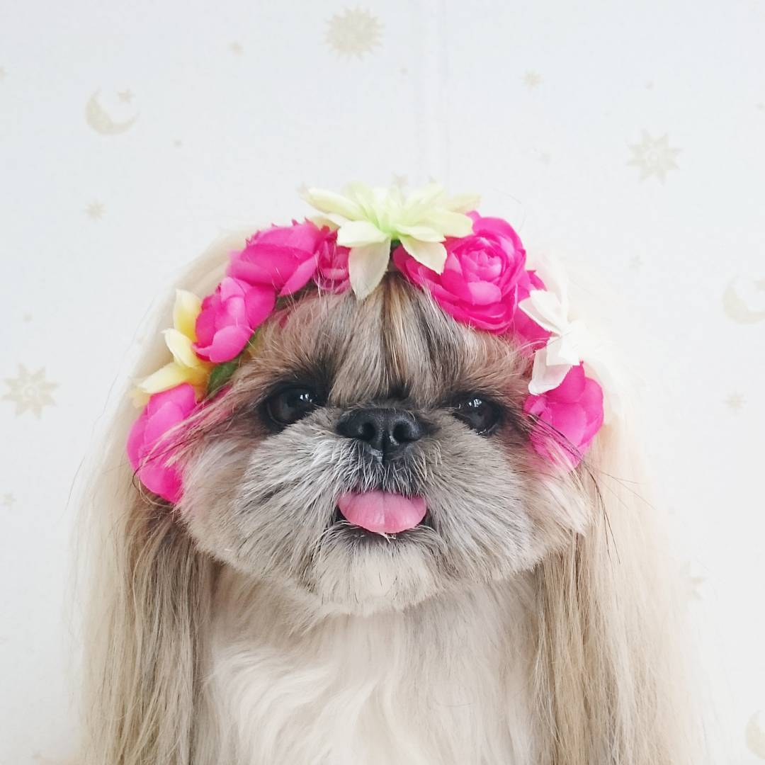 La perra de la casa - 1 4