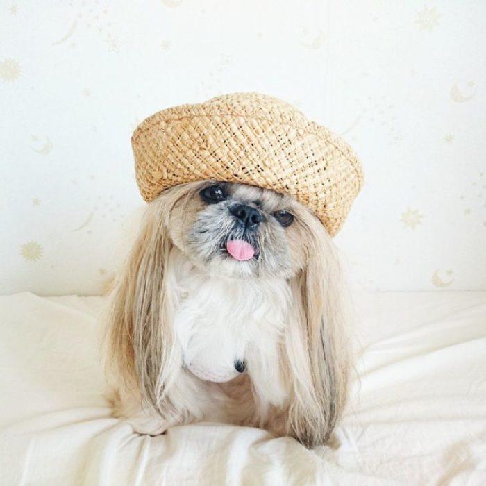perrita con un sombrero de granjera