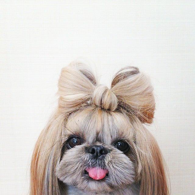 perrita con un moño hecho con su pelo