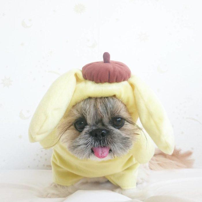 perrita vestida con un traje amarillo