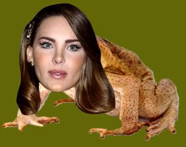 meme de un sapo con la cara de Belinda