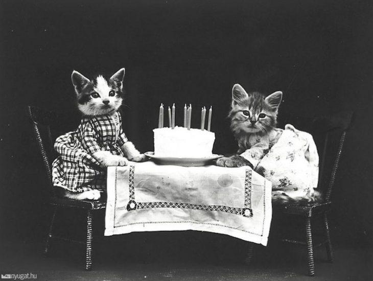gatitos en una cena romántica