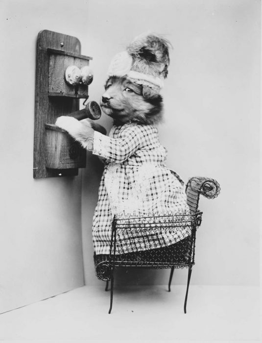 perrita hablando por teléfono
